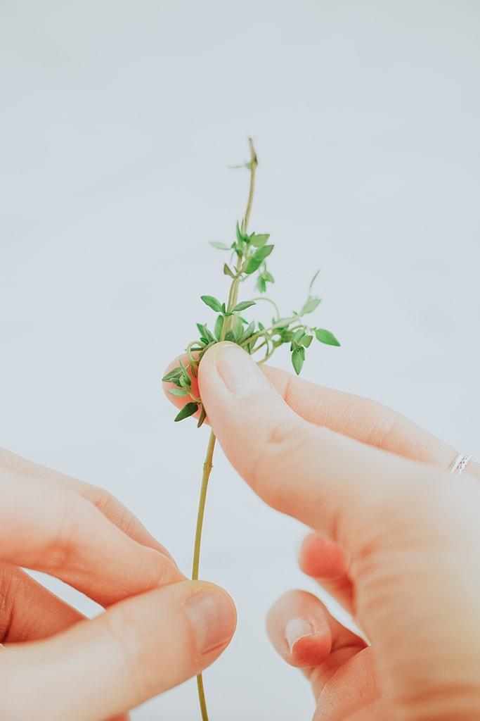 fingers holding fresh thyme